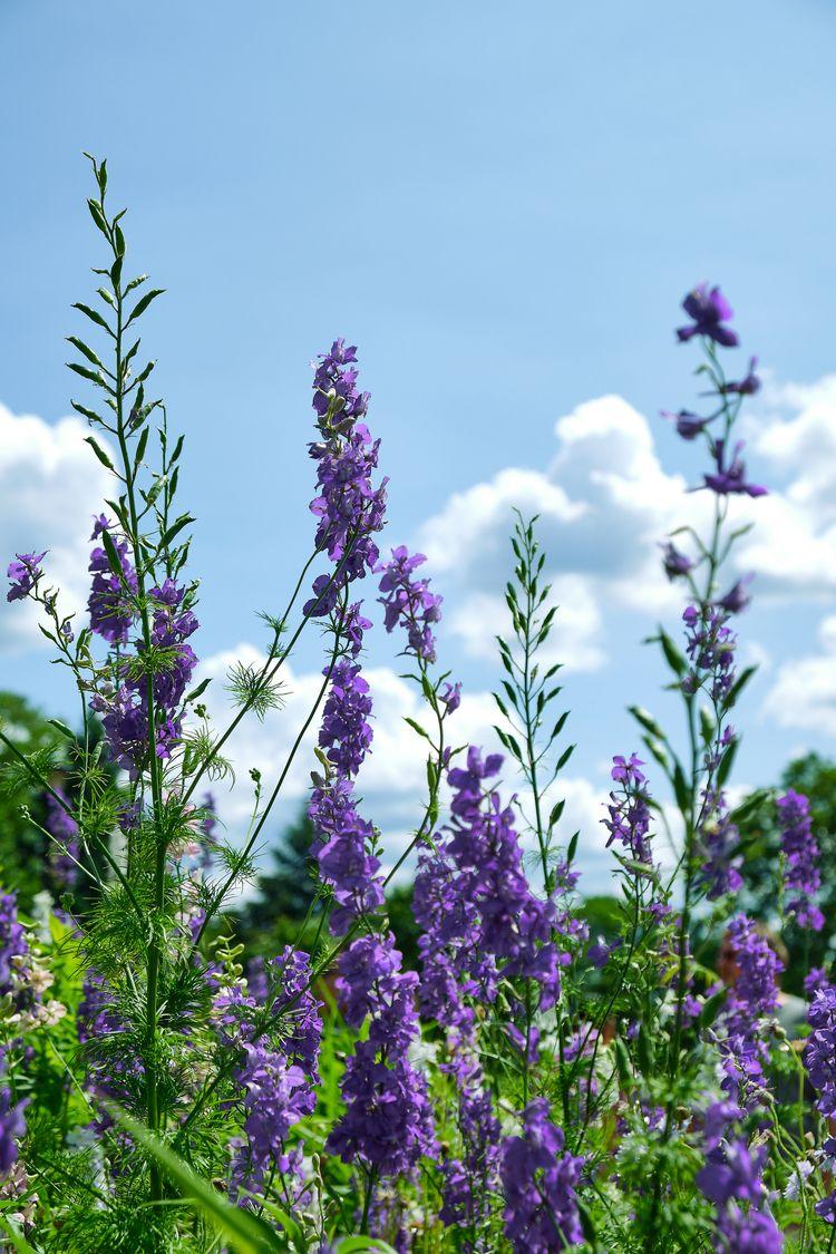 Summer blossoms (2019 - flowers - allunderheaven | ello