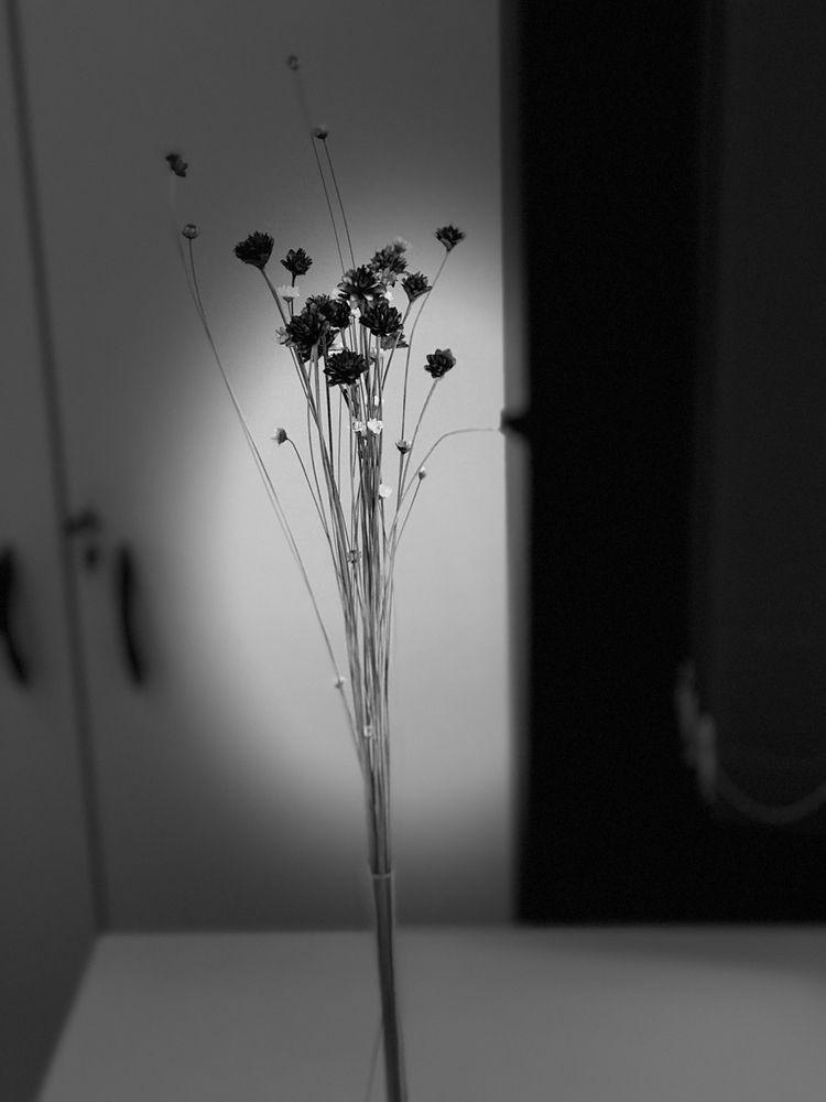 Simplicity - marcoabreu | ello