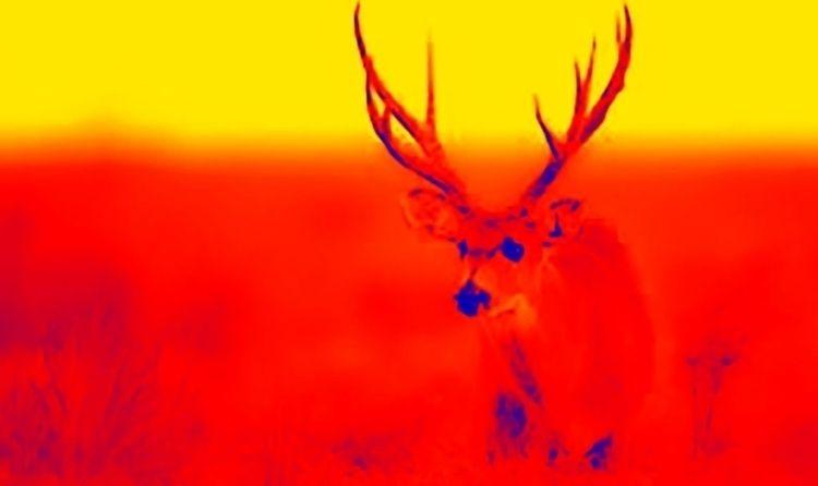 Ciervo de los pantanos 1 - ricardoantoniolopez | ello