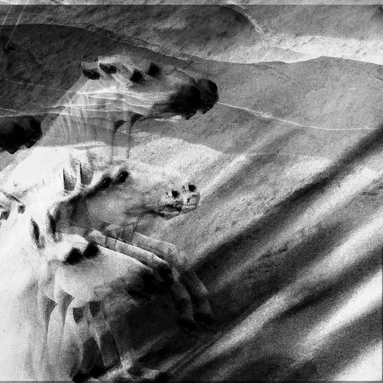 Lying Oak - 02, photography, fineart - debigraphy | ello
