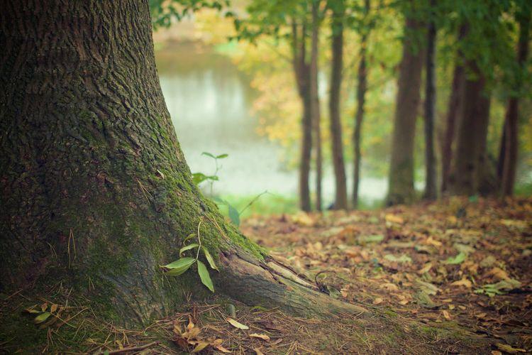 Deforestation Effects: Global P - amountainmomma | ello