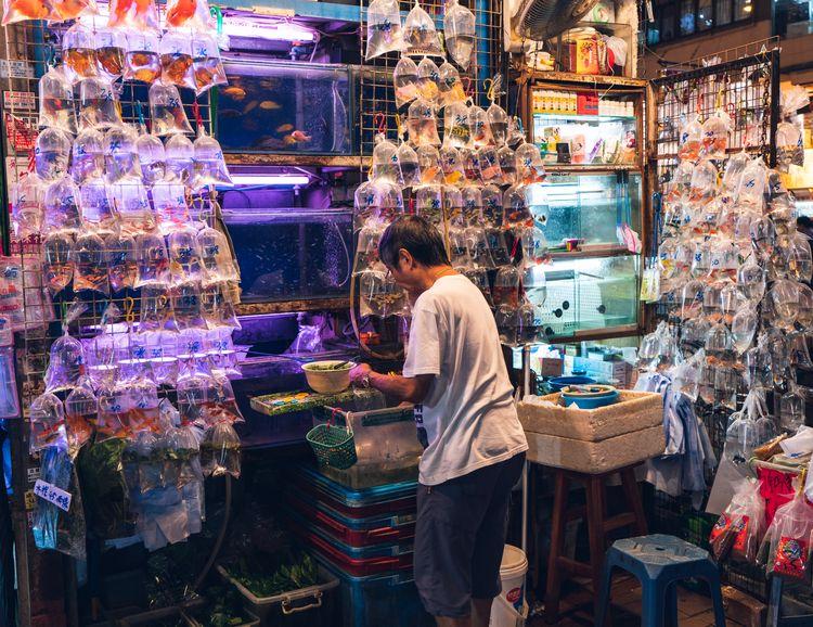 selling gold fish hong kong - jonathan_tsc | ello