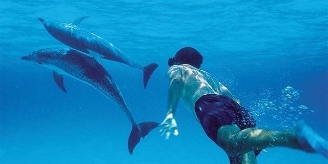 Dolphin Safari Goa planning vis - grisellanderson | ello