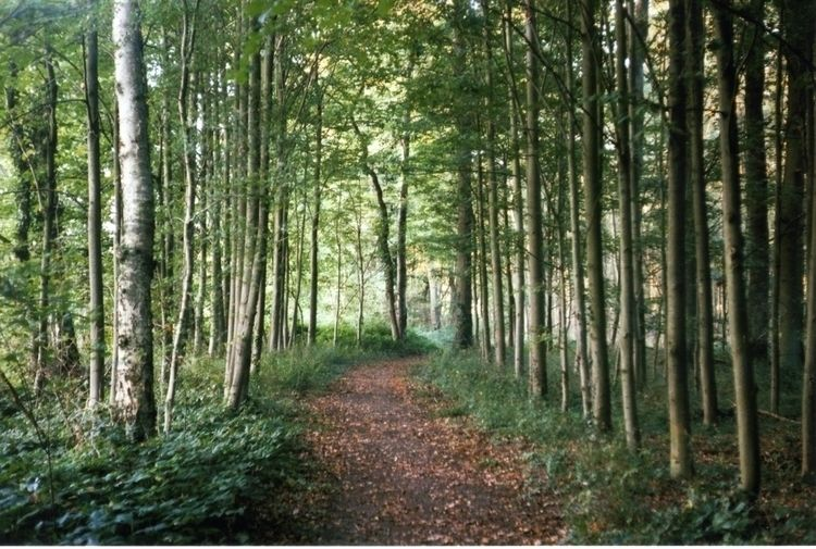 Birch Poplar Germany, 2014 - 35mm - flausens_hans | ello