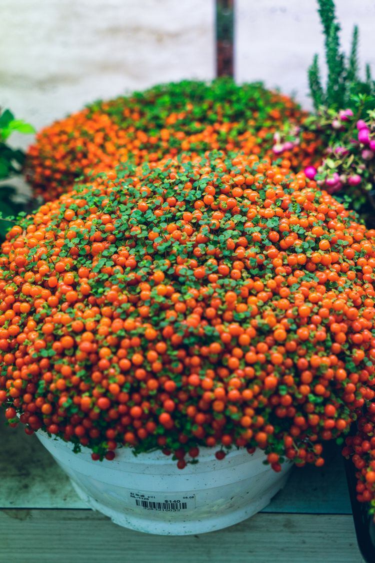 beautiful orange flower - jonathan_tsc   ello