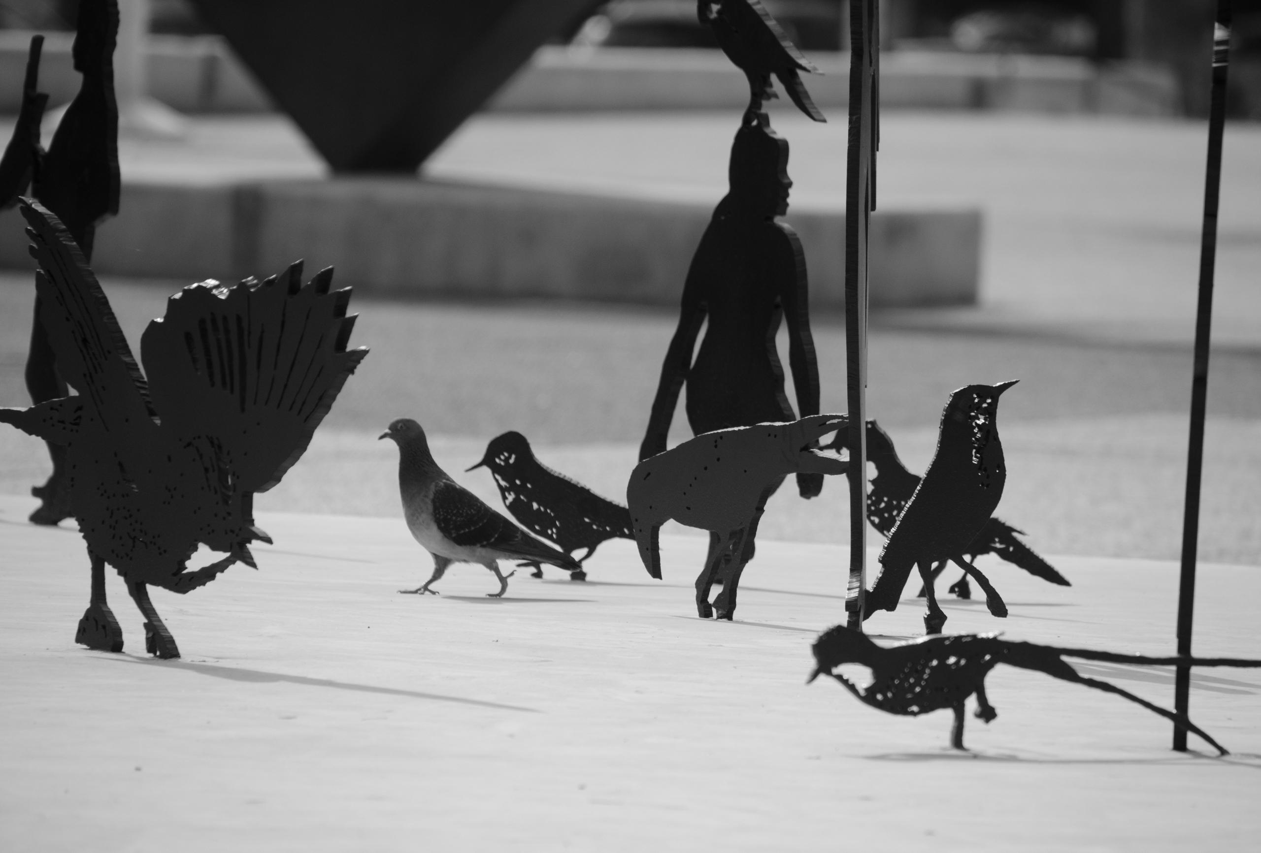 bird difference - birds, blackwhite - ydoron1   ello