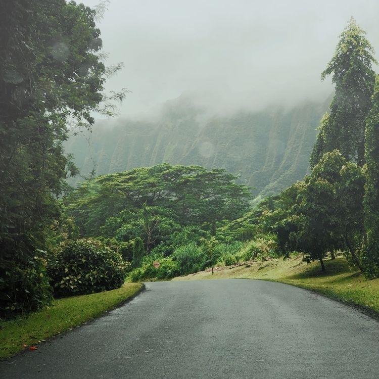 Lisa Kimberly - NewOnEllo, hawaii - lisakimberly | ello