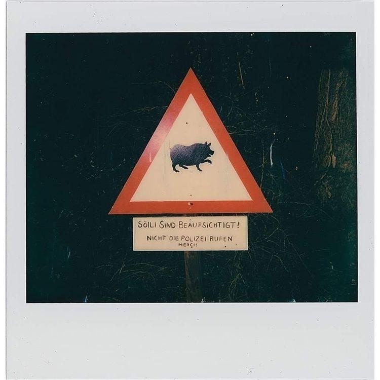 Pigs supervised. call police —  - schwedenwuerfel | ello