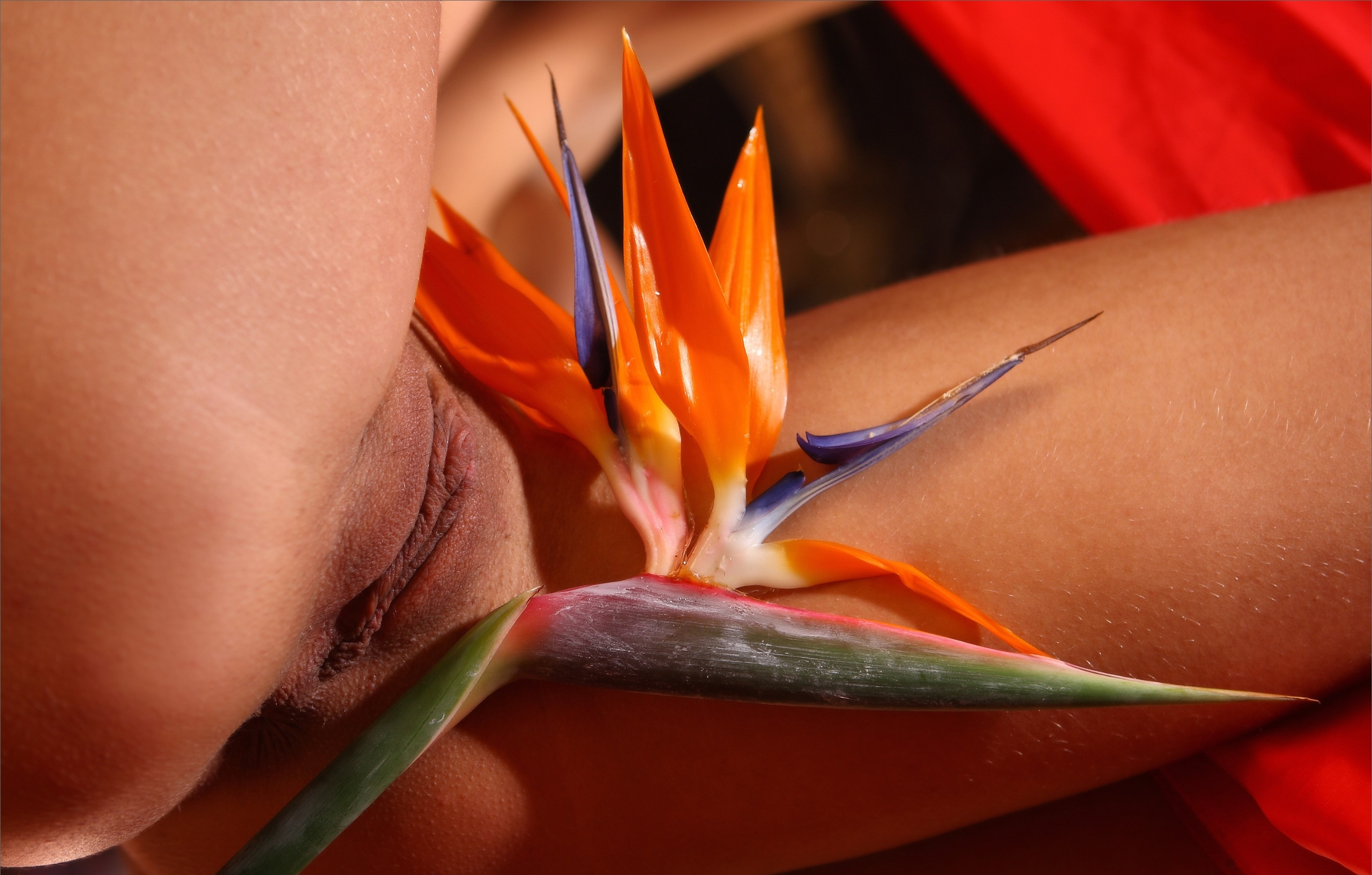 Bodyscapes: Strelitzia guarding - sunflower22a | ello