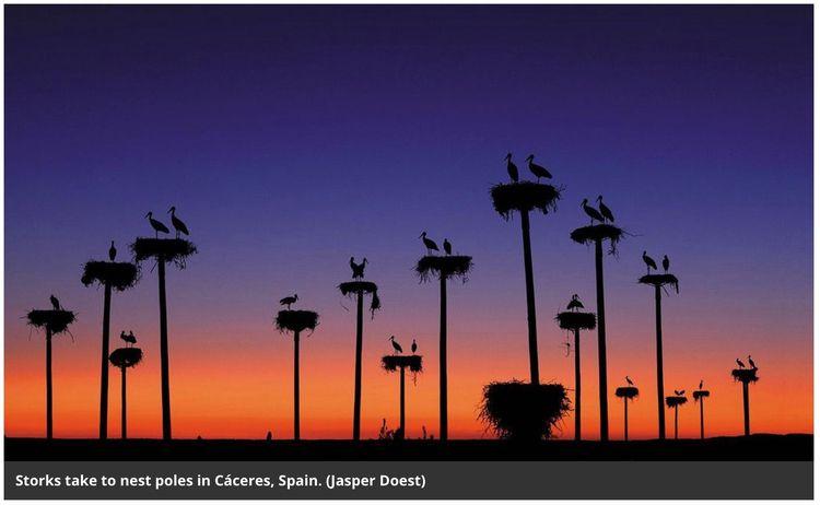 Storks Spain Portugal annual mi - ccruzme | ello