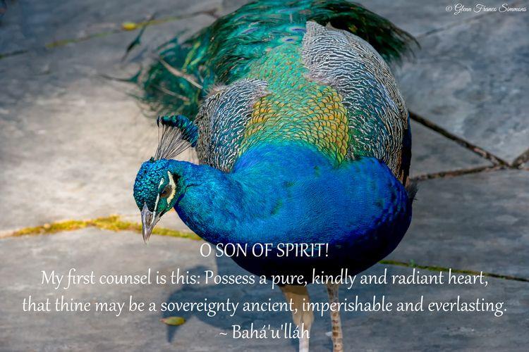 SON SPIRIT! counsel Possess pur - bahaiwritingsasart | ello