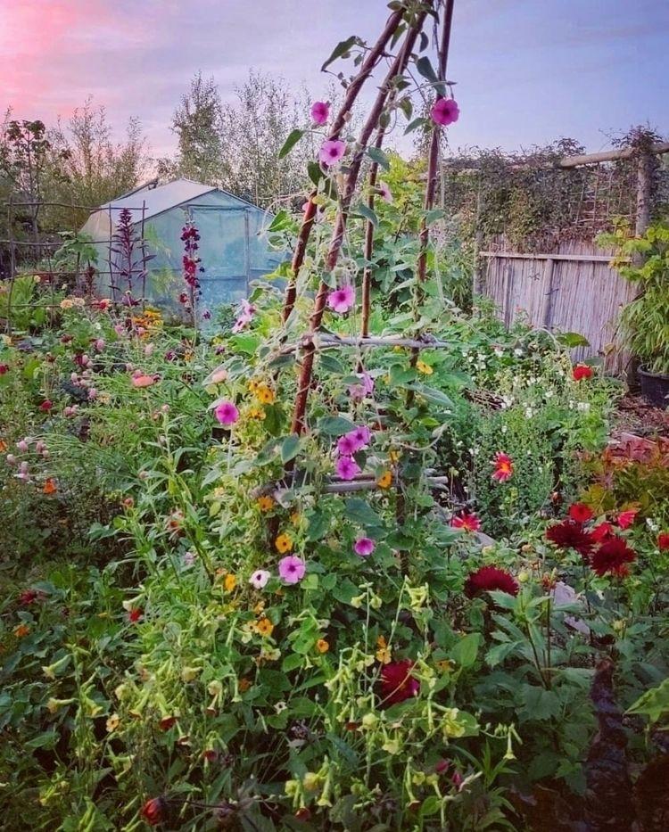 Early October garden. Black-eye - silviadekker | ello