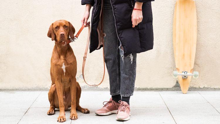 MAREVENTO - Leather dog leash c - luscofusco   ello