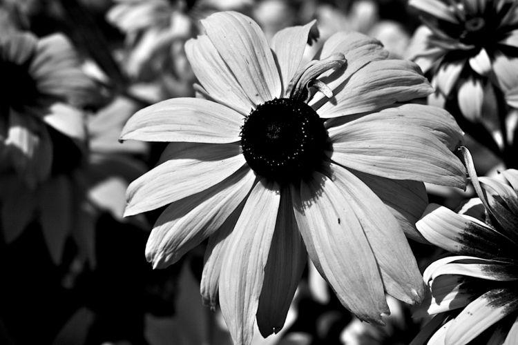 Botanical Monochrome 7438 - flowerphotography - dorian-stretton   ello