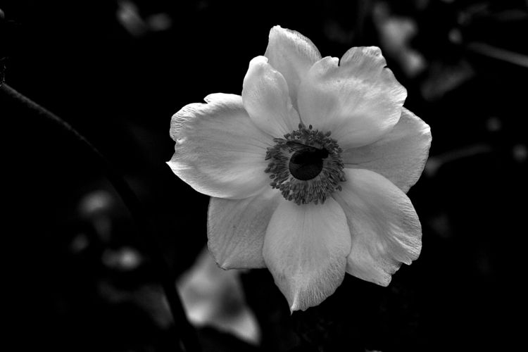 Botanical Monochrome 7441 - flowerphotography - dorian-stretton   ello