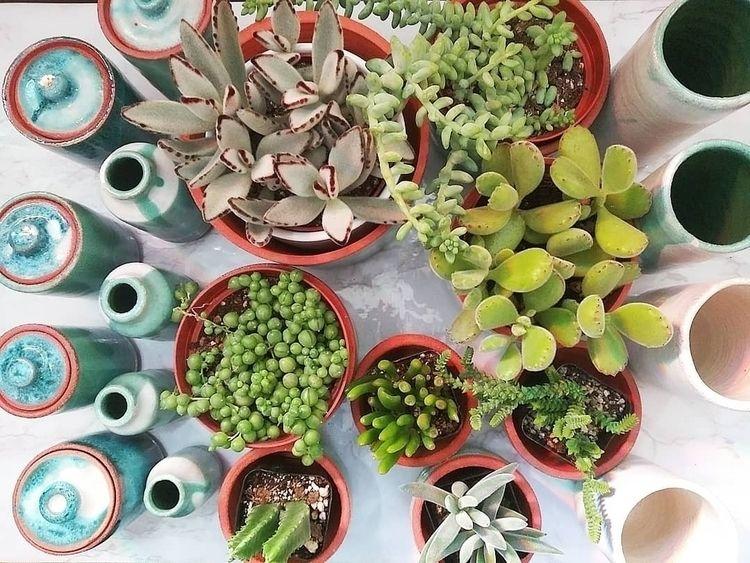 potting ready market - plantvessel   ello