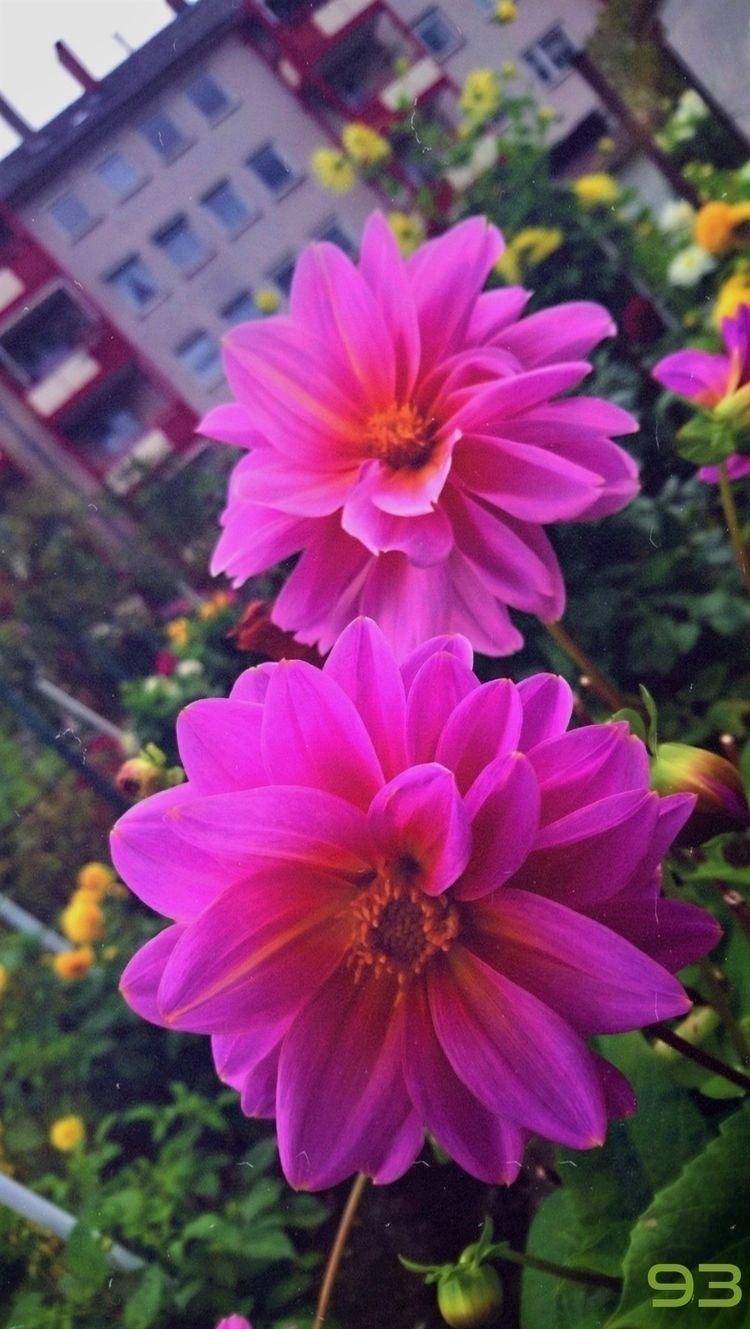 FLOWERS LOVE SUPPORT FRIEND, FO - novaexpress93 | ello
