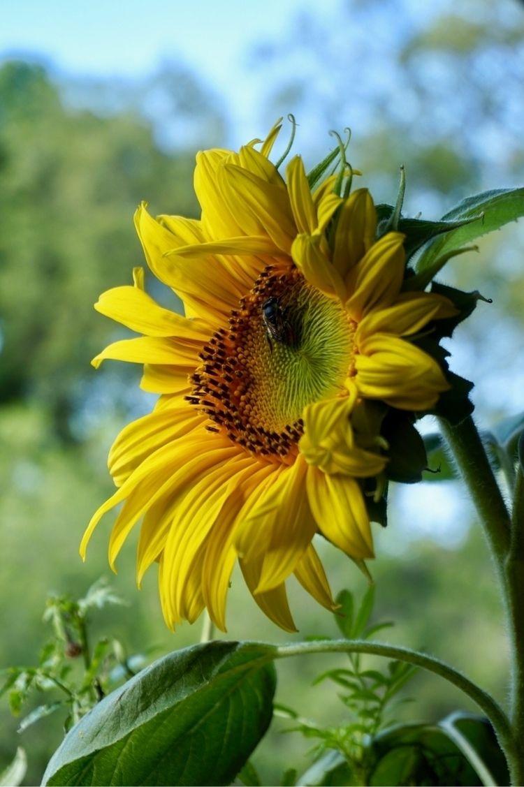 Plants pollinators. Rest series - katrinamjcraig | ello