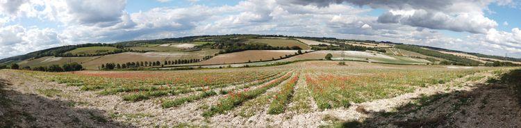 Poppy Fields - england, kent, countryside - mattoutdoors | ello