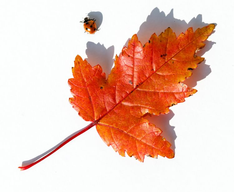 escape - photography, leaf, autumncolor - anttitassberg | ello