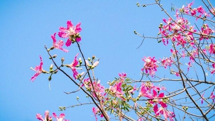 bloosom flowers Zhanghua,Taiwan - chaoyangiu | ello