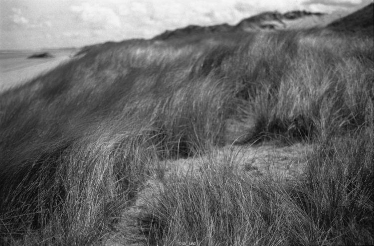 dune, analog, ilford, film, blackwhite - ol_sea | ello