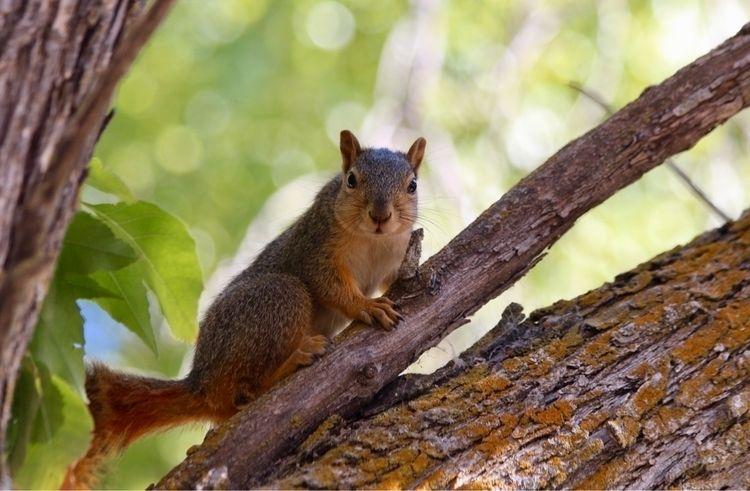 squirrel, nature, wildlife, animals - phoenikx   ello