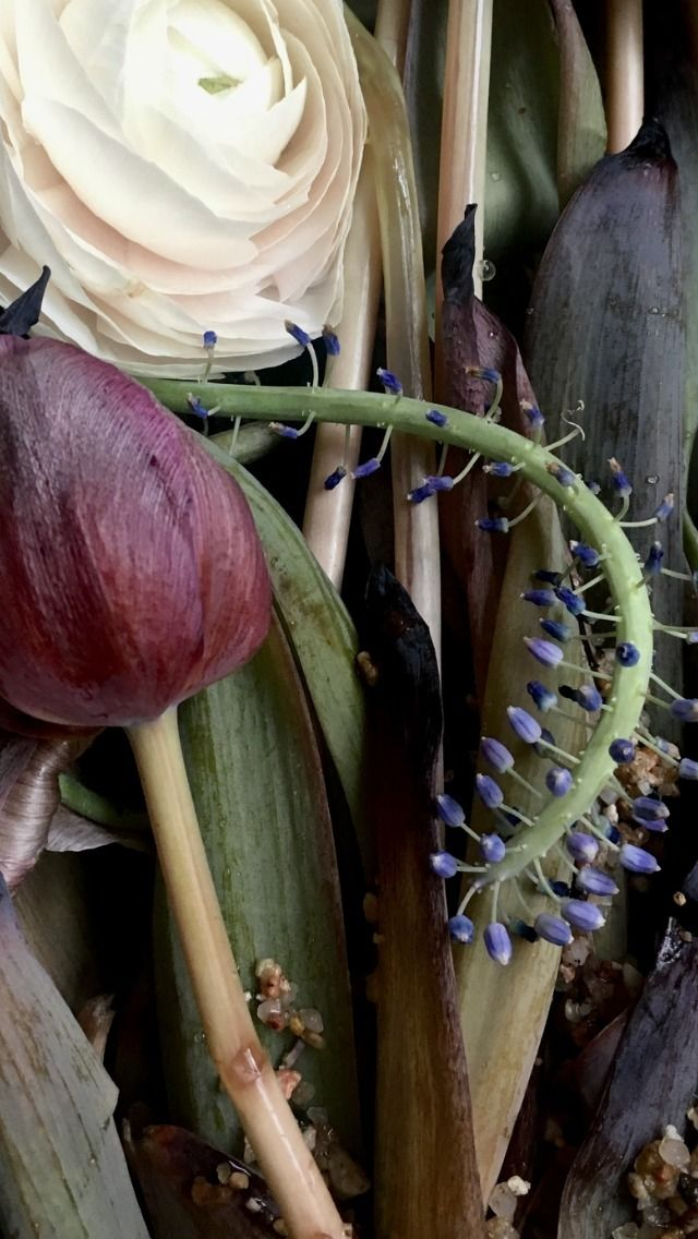 Flower Trash series - Photography - dylanwajichecki | ello