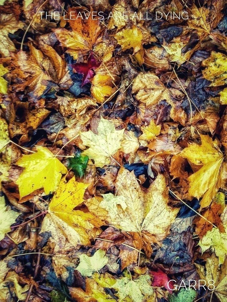 leaves dying - autumn, foliage, colour - garr8 | ello
