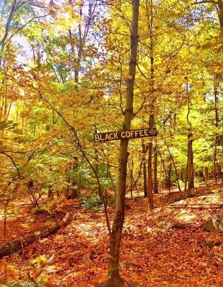 nature, hiking, upstateny, fall - stevieshea | ello