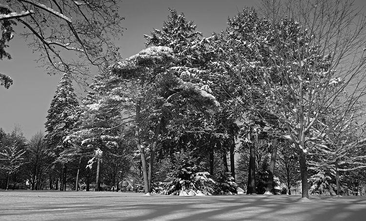 Crispy cold morning walk - Cold - darkroomimaging | ello