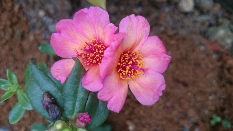 stop bloom flowers seed - shameeracarrim | ello