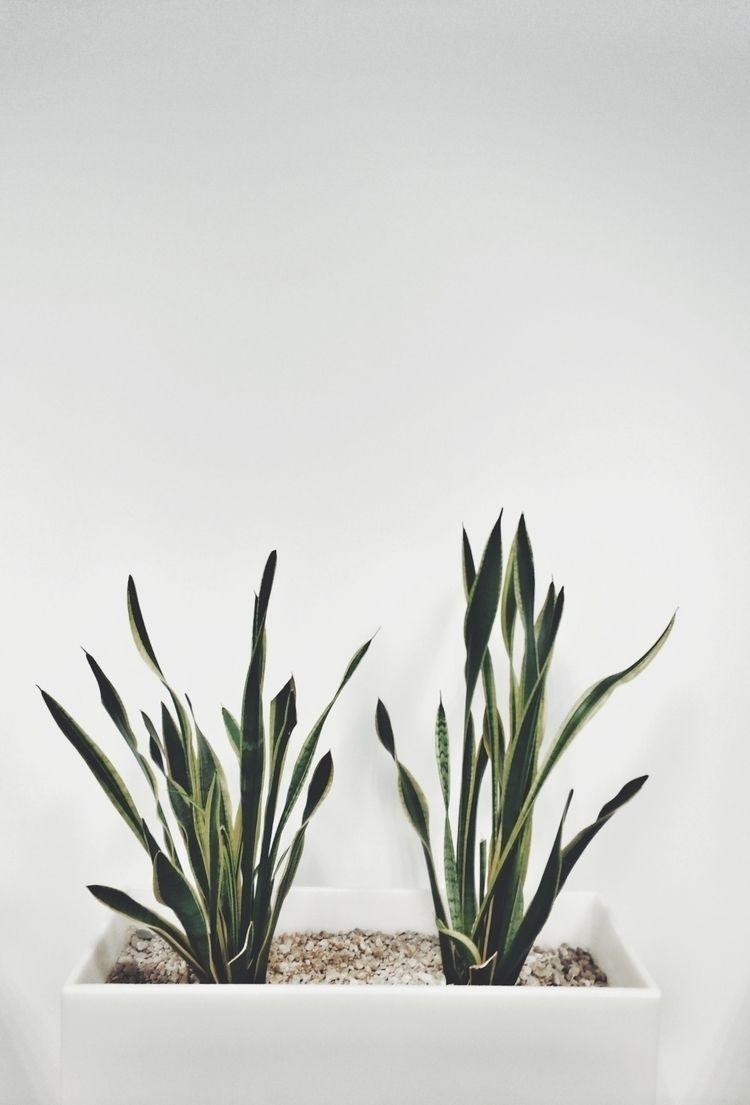 photography, minimalism, plants - theminimalife | ello
