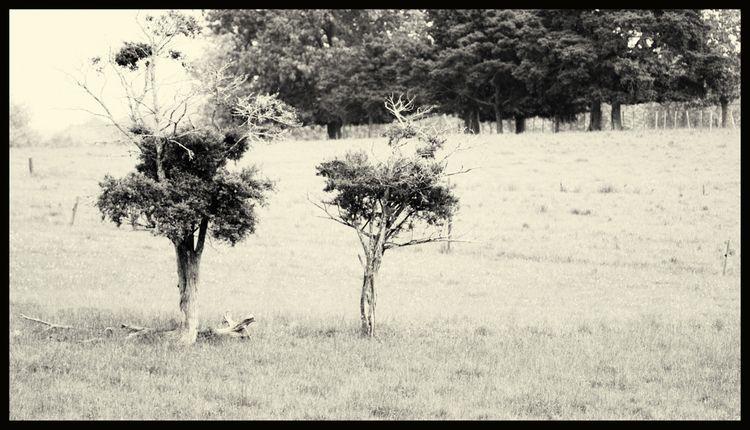 Twins fence, shot wide open. Lu - blindpoet | ello