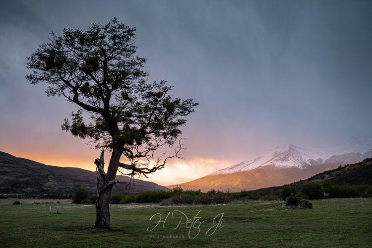 Lonesome tree Morning light Ser - scorpioonsup   ello