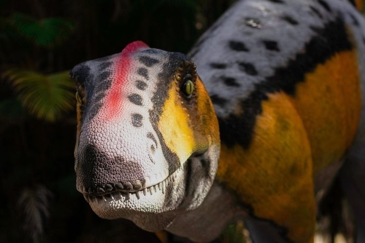 BEAUTY! Rosewood Raptor Sculptu - natureworks   ello