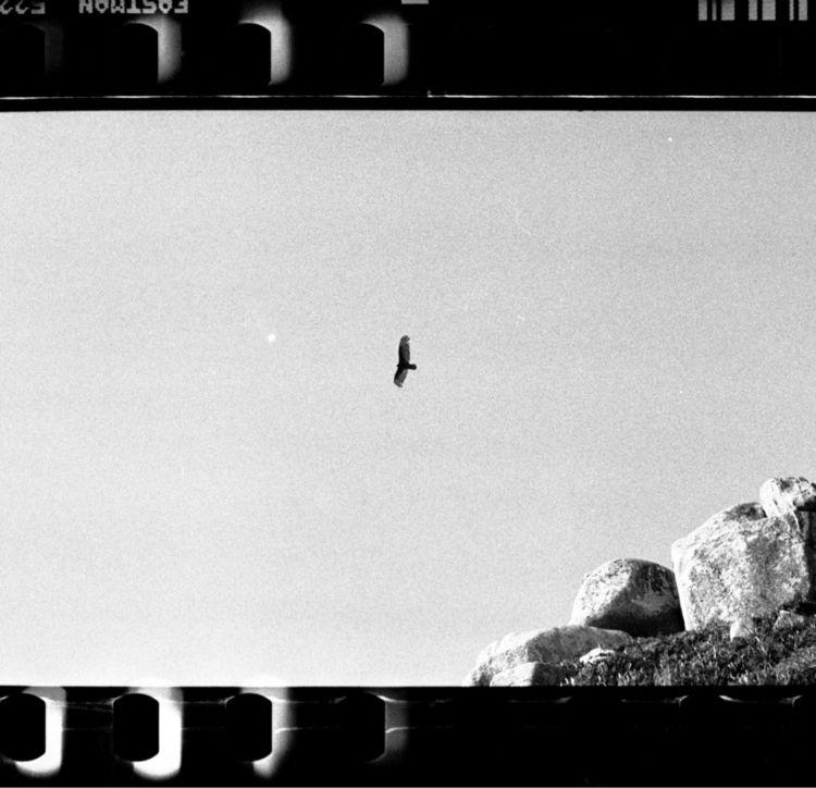 35mm, filmisnotdead, analoggang - mbttncourt   ello