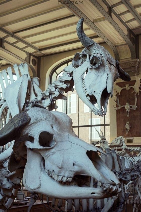 Family Portrait 2: Paleontology - daaram | ello