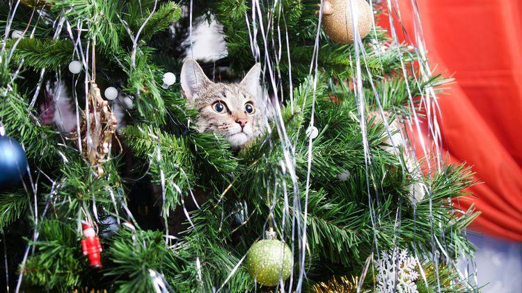 Cats Christmas trees! Meowy hil - bonniegrrl | ello