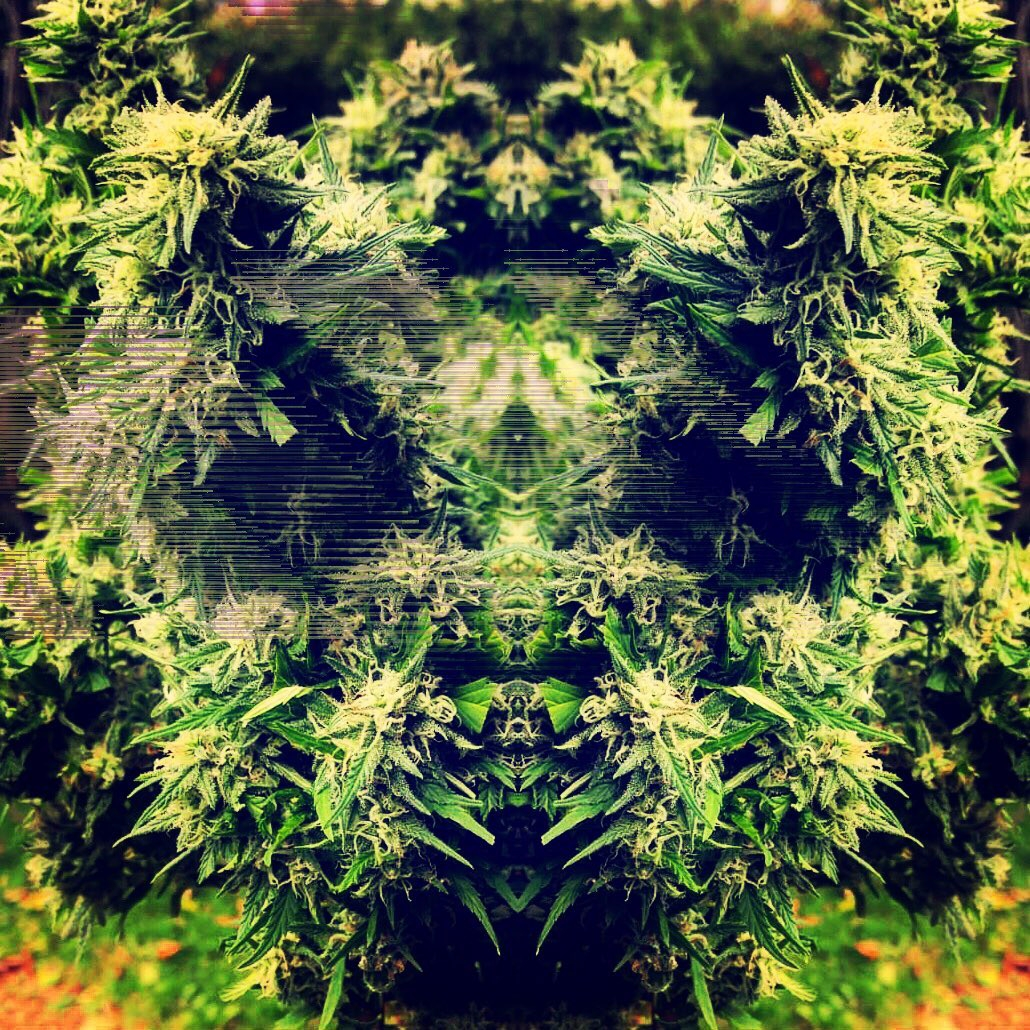 trippy, grower, 420, marijuana - huntersalas | ello