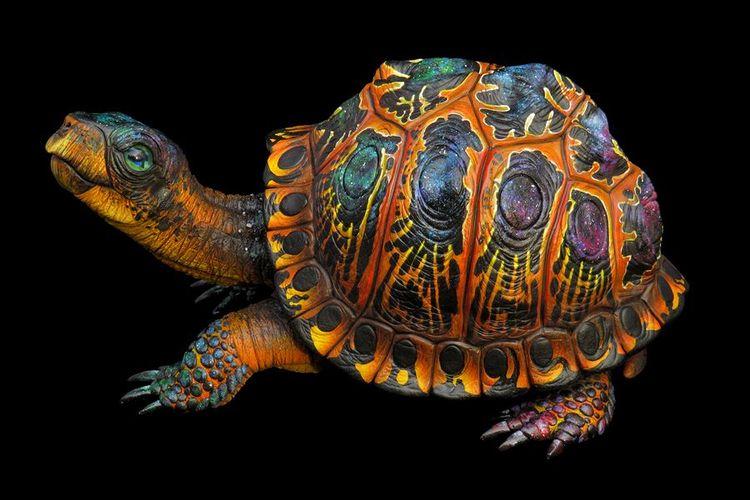 Celeste Cosmic Turtle. 4 gourds - c-bevan-art | ello