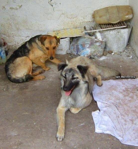 dogs animal shelter - animals, photography - igormarinovsky | ello