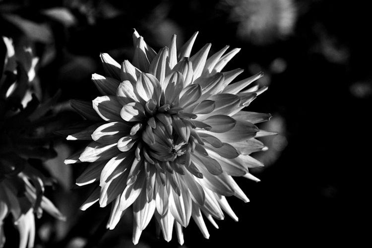 Botanical Monochrome 7810 - flowerphotography - dorian-stretton | ello
