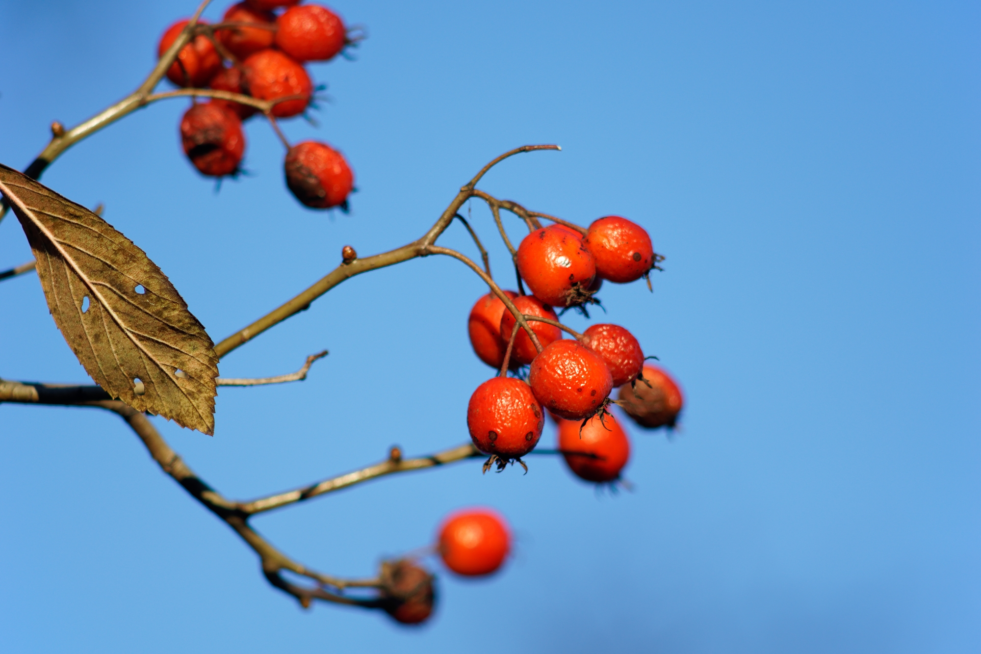 Elysium - photography, berry, tele - marcushammerschmitt | ello