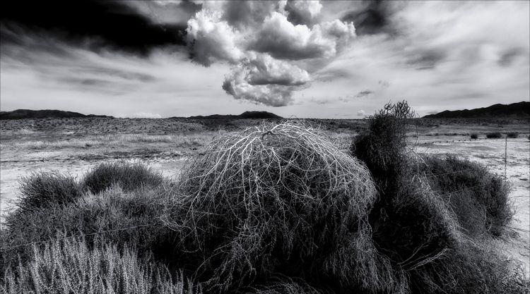tumbleweeds stacked fence Nevad - docdenny | ello