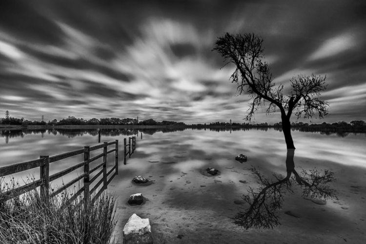 lone tree Millarochy Bay LochLo - stevepurnell | ello
