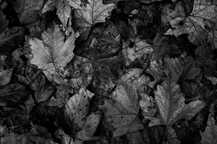 Fall - leica - ben-staley | ello