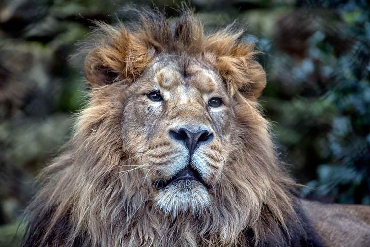 Lionheart - jonathanjones | ello