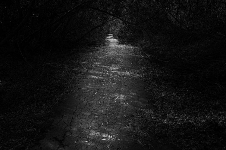 Path - leica - ben-staley   ello