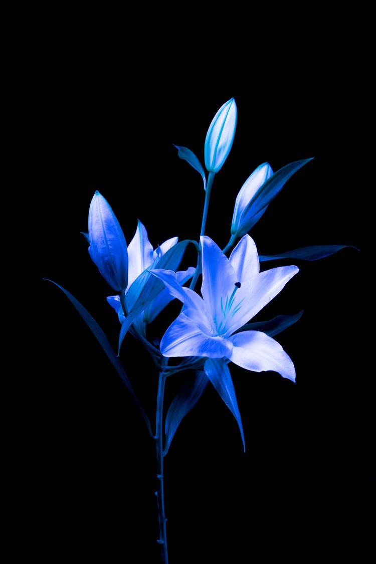 Neon flower - adrianacodes | ello